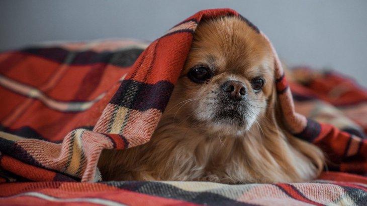 犬にとっての『悪い飼い主』の特徴4選!その行動、実は悪影響になってるかも?