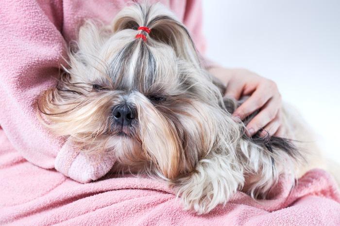「愛玩犬」とは何か 歴史から問題点まで