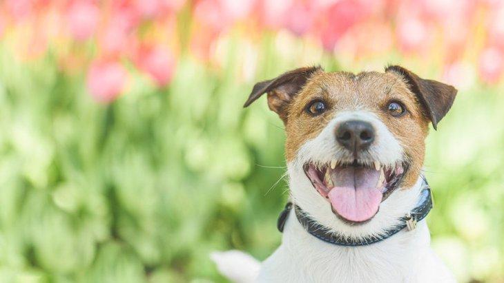 犬が人を大好きになる『育て方』5選!NG行為からコツまで解説
