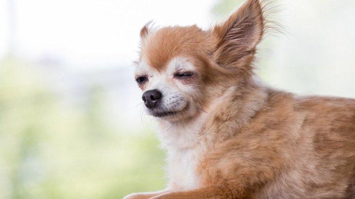 犬の「老眼」症状3つ 飼い主ができるケアとは
