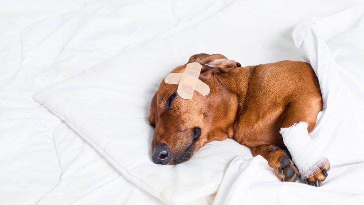 犬が室内でしがちな『3つの怪我』 予防するための対策を徹底解説