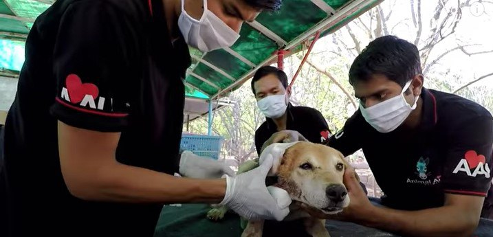 耳に大きな傷がある犬をレスキュー!痛みがありながらも微笑む老犬