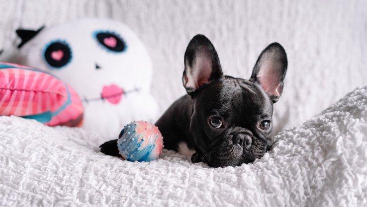 初めて犬を飼う人必見!準備するものやNG行為、健康的に育てるためのコツまで徹底解説