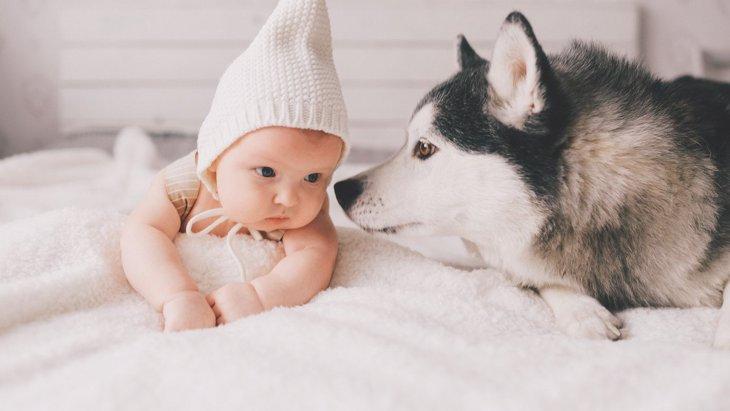 『赤ちゃんと犬の初対面』で気を付けること3選!警戒しないようにするには?