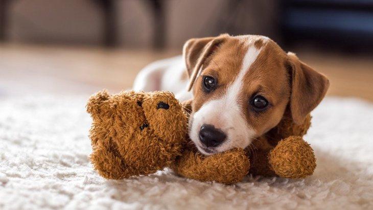 犬がおもちゃを持ってくるのに離さない理由とは?