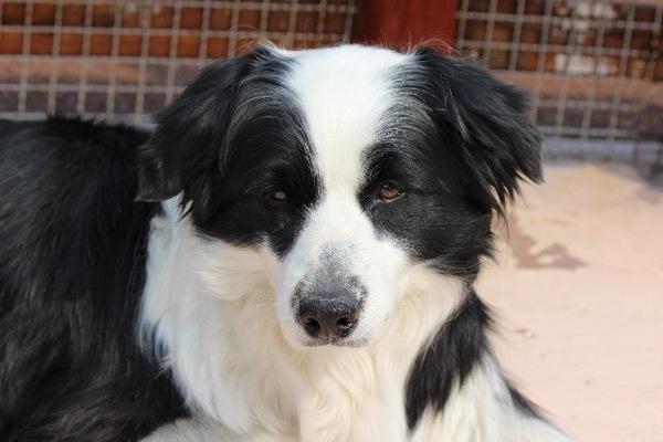 老犬の血尿は病気のサイン