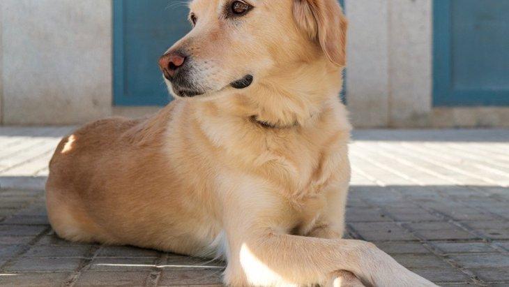 犬が心からリラックスしている時に見せる態度や仕草5選