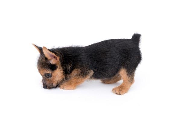 犬が髪の毛を食べる理由とやめさせる方法