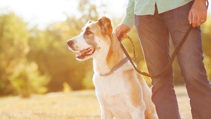 知らない人に愛犬を触らせる時の注意点7つ