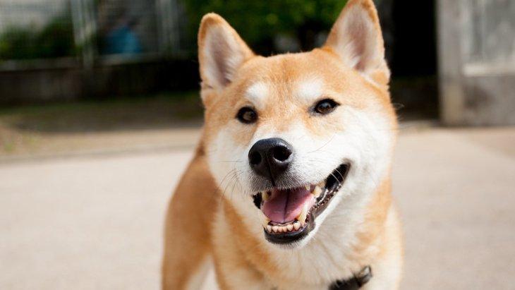 笑顔をしているように見える犬種5選
