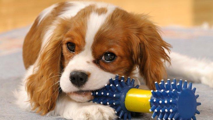 犬が一人遊びしているときの行動5つ