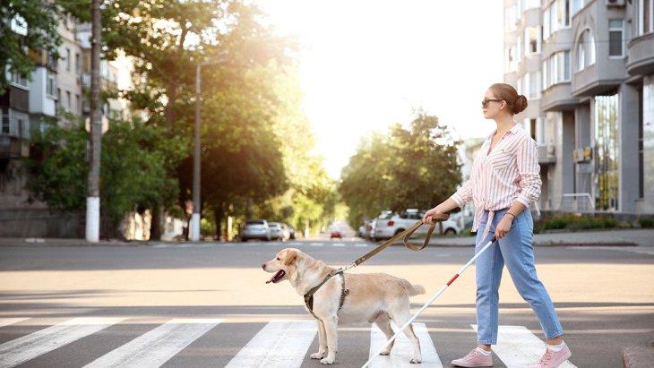 『盲導犬に絶対してはいけないNG行為』4選