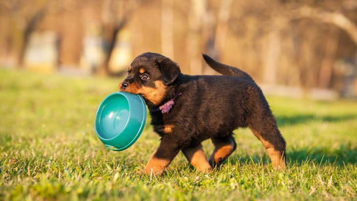 犬は『カニ』を食べても大丈夫?間違った与え方は?