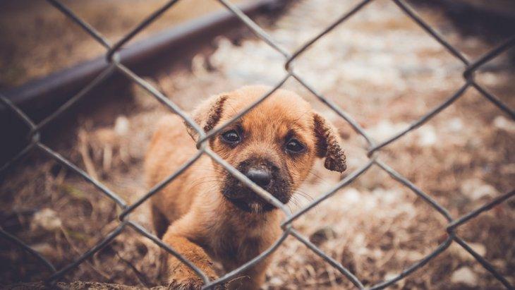 """悪質な子犬工場""""パピーミル""""を減らすために、私たちが出来ること"""