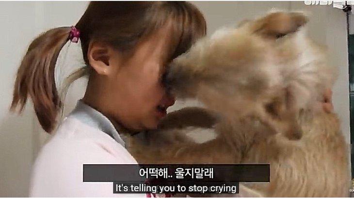 保護犬が女の子の涙をぬぐうわけは?