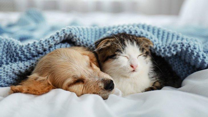 犬がストレスを感じやすい『冬の環境』4選!ベストな環境を作るコツとは?