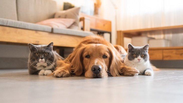 犬がする『猫みたいな行動』5選