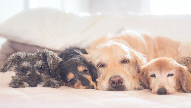 小型犬と大型犬を一緒に飼うことはできるの?注意点は?