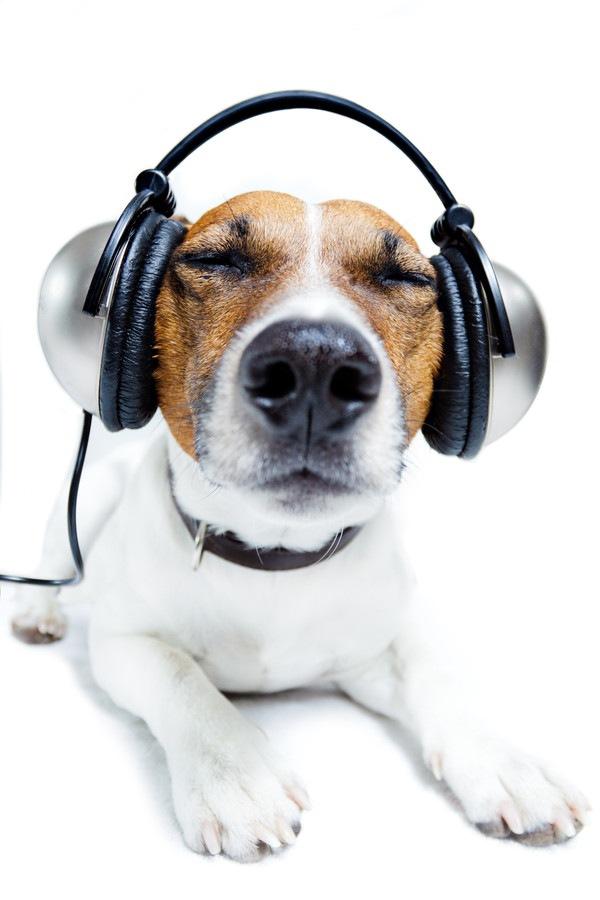 音楽が犬に与える影響とは?