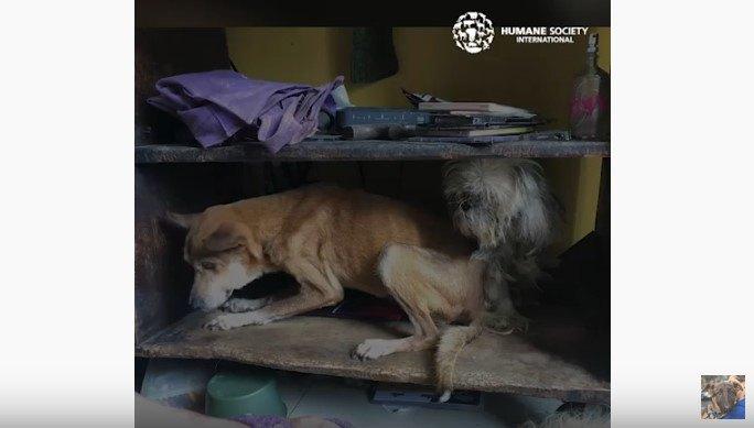 多頭飼い崩壊で虐待、ネグレクトの5年を耐えた2匹の犬を救助