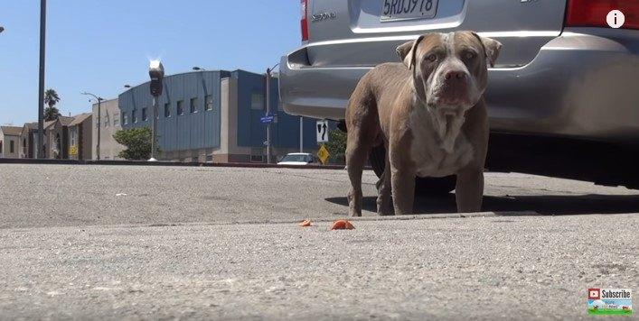 レスキューにおびえ、落ち込んだ犬の心を救った意外な方法とは?