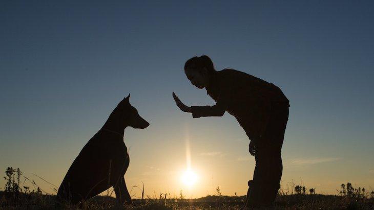 犬にしつけをしないで育てるとどうなるの?