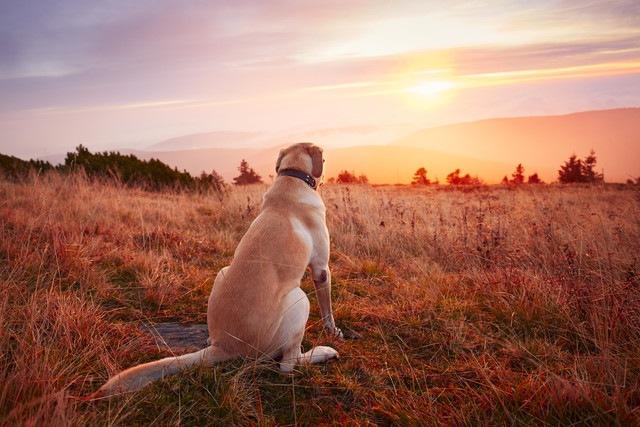 犬には景色がどう見えている?