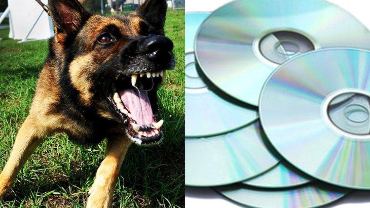 探知犬はDVDも嗅ぎ分ける!犯罪組織も恐れるその驚くべき能力