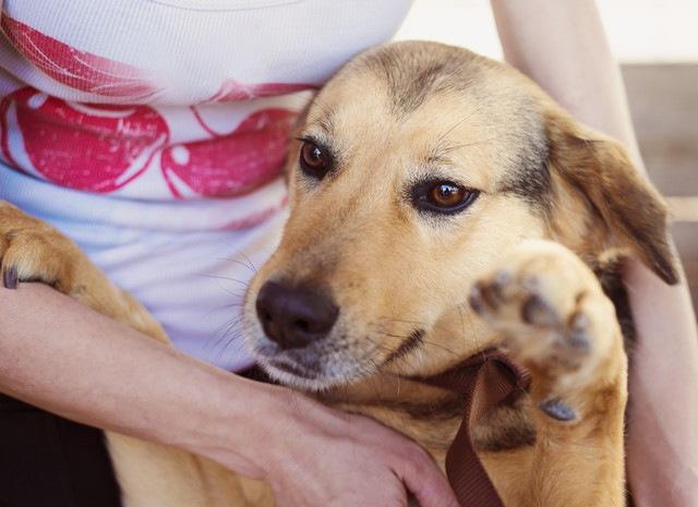 犬のしゃっくりが止まらない!毎日出てしまう場合の対処法と病気の可能性