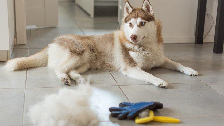 犬の抜け毛と油の流出、驚きの使い道とは?