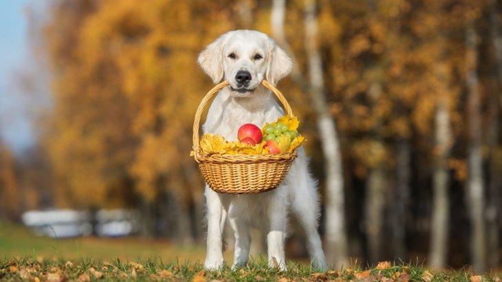 気をつけて!犬に絶対NGな『果物の種』3選
