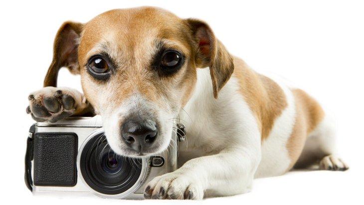 犬を撮影すると目が緑色になるのは何故?