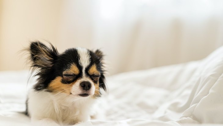 犬が『しんどい』と感じているシチュエーション4つ