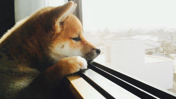 犬が退屈なときにする4つの仕草