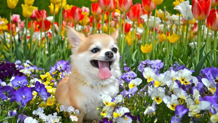 犬にユリ科の植物は危険!食べた時の症状と対処法、予防対策まで