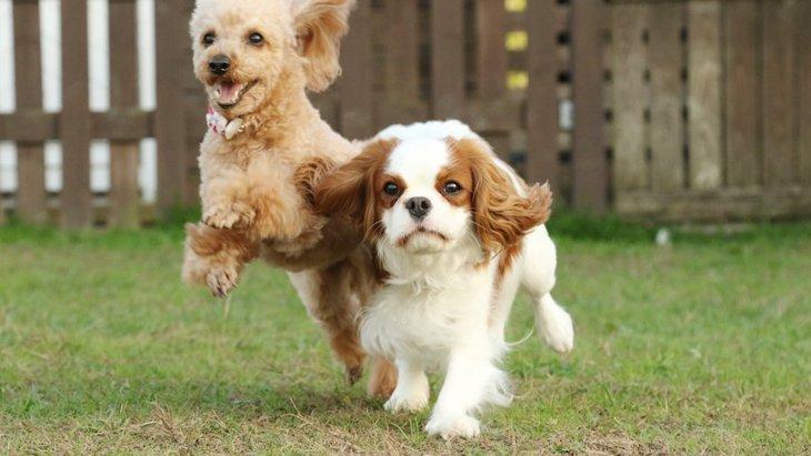 犬の性格は年齢とともに変化する?アメリカで行われた研究結果
