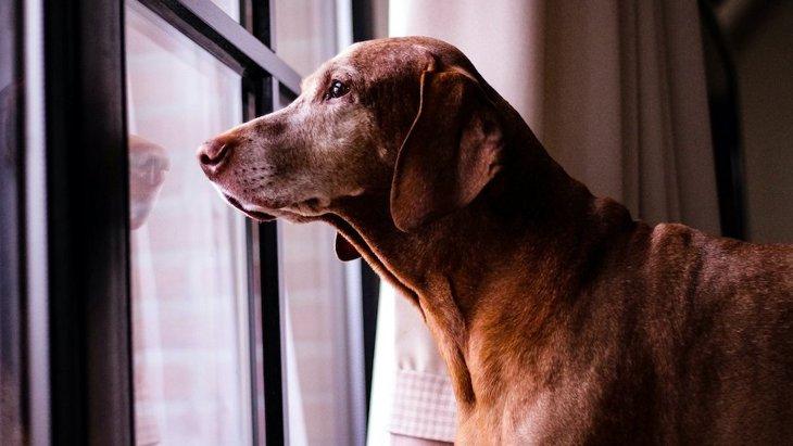 犬が飼い主の横を通り過ぎる時の心理3選