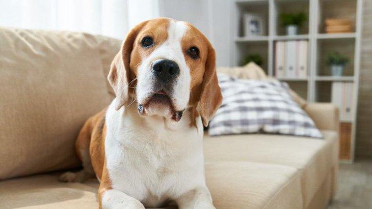 【絶対NG】犬を捨ててしまう飼い主にありがちな理由5選