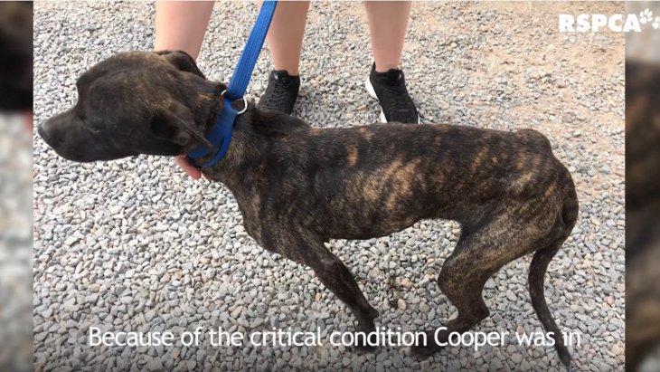 裏庭でネグレクトされガリガリに…救われた犬と飼い主への実刑判決