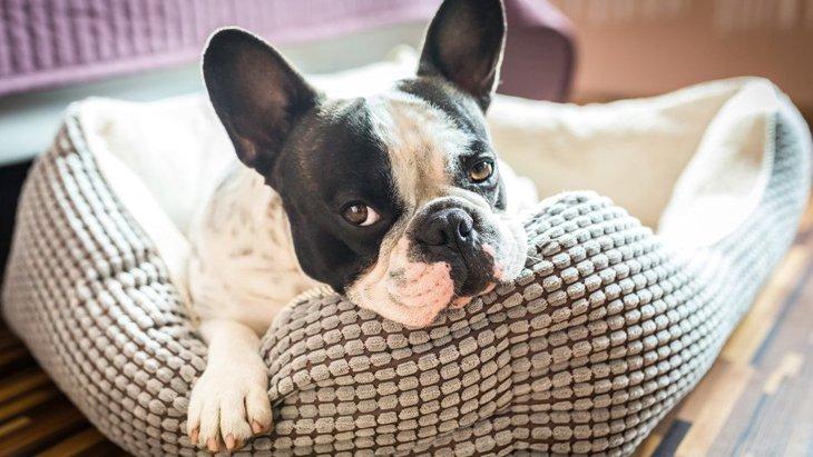 犬が『迷惑』と感じている飼い主の行動4選