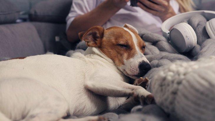 犬が飼い主に寄りかかって眠る心理6つ