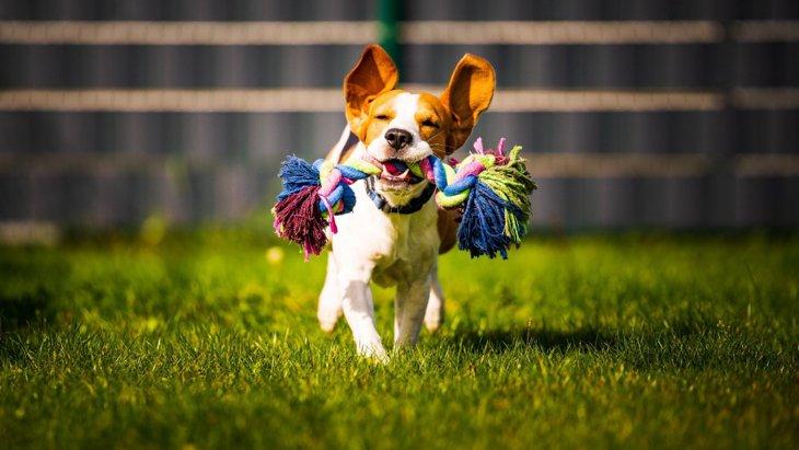 愛犬のための買い物は自分への場合よりも幸福感を高めるという研究結果