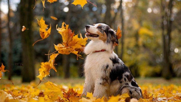 秋にしてはいけない『犬へのNG行為』4選