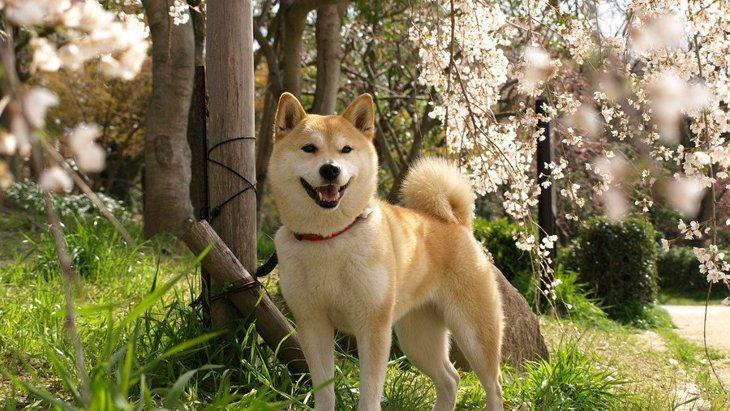 愛犬との思い出の作り方5つ