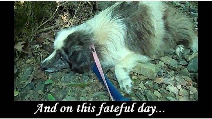 """8年間も森の中で孤独に生き続けた盲目の犬""""ウィラの物語"""""""