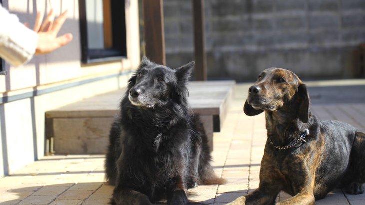 犬が使われている漢字7選!由来や意味まで