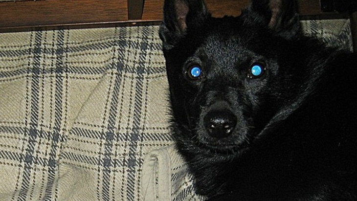 犬と飼い主は顔が似ていると言われる理由について