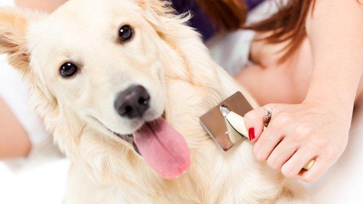 犬用ブラシ人気ランキングTOP5
