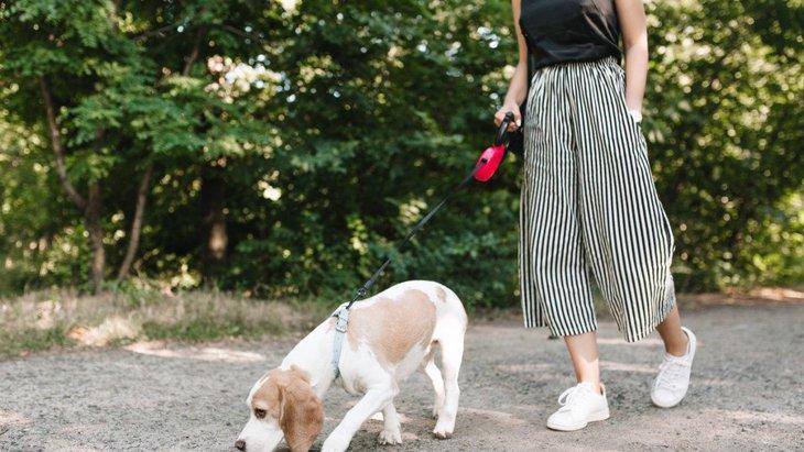 散歩中に匂いを嗅いだ犬が新型コロナウイルスに感染する可能性は?