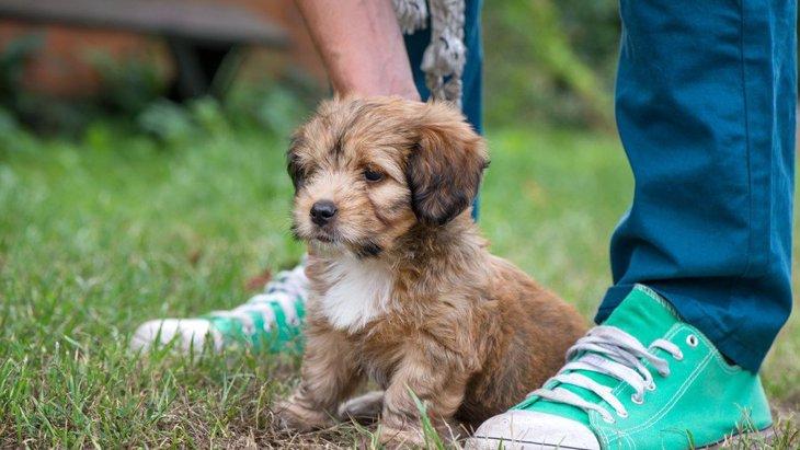 犬が怯えている時にやるべき『落ち着かせる撫で方』4選